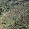 Dezastru în pădurile Bihorului
