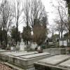 Defrişările din Cimitirul Municipal - Garda de Mediu sistează tăierile