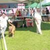 Să ai un câine frumos nu-i treabă ușoară! - Spectacol canin în Băile 1 Mai