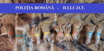 Percheziții de proporții în România și Ungaria - Traficanți de droguri reținuți