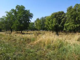 Proiect finanţat la cererea orădenilor - Parc de peste 1,5 hectare în zona Cartierului Tineretului