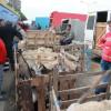 Peste 150 de miei şi iezi au fost sacrificaţi ieri - Ofertă bogată în piața de miei