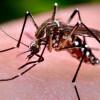 Virusul West-Nile în Bihor - Cinci cazuri confirmate, o persoană decedată