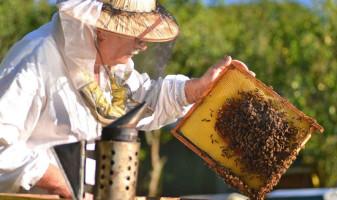 MADR. Ajutor de minimis în apicultură - Sprijin de 23,7 lei/familia de albine