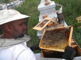 MADR. Pentru apicultori - Ajutor de minimis de până la 20.000 euro