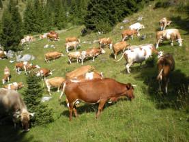 APIA. Arii naturale protejate - Obligaţii pentru fermierii cu exploataţii agricole