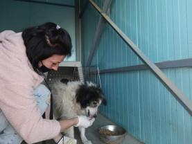 Izolat din cauza epidemiei, un câine a supraviețuit o lună fără mâncare și apă - Bobiţă cel curajos, salvat de voluntari