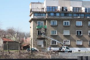 Oradea. Tăieri masive de arbori pe malul Crişului Repede