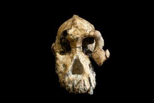 Descoperit în Etiopia - Craniu vechi de 3,8 milioane de ani