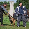 Participare internațională la Cupa Braveheart Oradinum - Concurs de dresaj canin