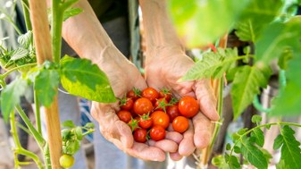 APIA. Plata în avans - Un miliard de euro în conturile fermierilor