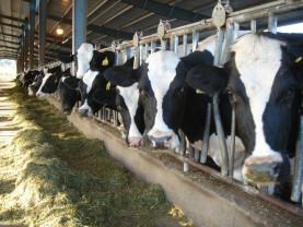 ANZ. Verificări la crescătorii de animale - Măsuri în cazul  identificării unor nereguli