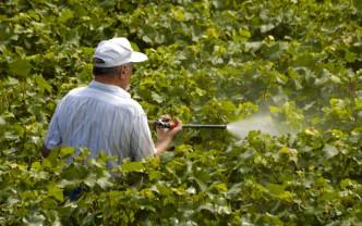 Buletin de avertizare fitosanitar - Tratamente pentru viţa de vie