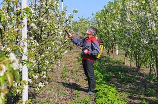 Buletin de avertizare fitosanitar - Tratamente pentru pomi fructiferi