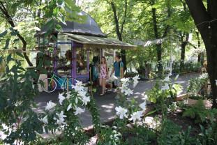 În Parcul Libertății din Oradea - Aleea crinilor regali