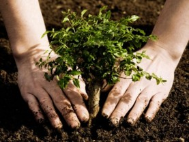 CJAPIA Bihor. Sprijin pentru prima împădurire - De astăzi demarează primirea cererilor