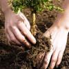 PNDR: Submăsura 6.3, ferme mici - Condiţii pentru accesarea fondurilor europene