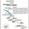 Din 10 august - Modificări la traseul liniei 14