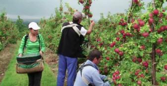 APIA. Subvenţii fermieri - Calendarul plăţilor în luna decembrie