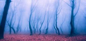 OZN-uri și fenomene paranormale - Parc Intergalactic, la Cluj