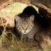 De la Paris, la Zoo Oradea - Figaro și Lucifer, doi motani singuratici