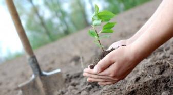 APIA. Termen limită la - Sprijinul pentru prima împădurire