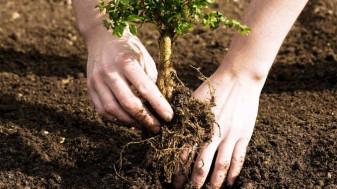 APIA. Prima împădurire - Depunerea cererilor – până la 15 iunie