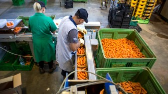 AFIR: Procesarea și marketingul produselor pomicole - Din 14 octombrie demarează depunerea cererilor