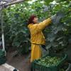 Sprijinul cuplat în sectorul vegetal - Depunerea documentelor obligatorii la plata subvenţiilor (II)