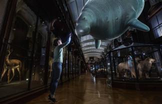 La Muzeul de Istorie Naturală din Paris - Specii dispărute, readuse la viaţă