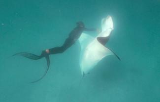 Un diavol de mare cere ajutorul unor scafandrii - Întâlnire subacvatică memorabilă