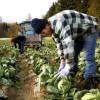 PNDR: Submăsura 6.3, ferme mici - Condiţii necesare pentru accesarea fondurilor europene