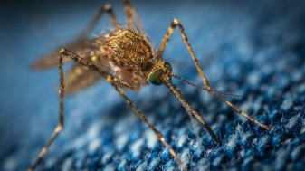 Pentru prevenirea îmbolnăvirilor cauzate de mușcăturile de insecte - Măsuri comunitare și individuale