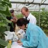 MADR. Siguranţa alimentară - Verificări privind nivelul reziduurilor de pesticide