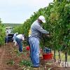 MADR: Acordarea sprijinului financiar - Condiţii de eligibilitate în viticultură