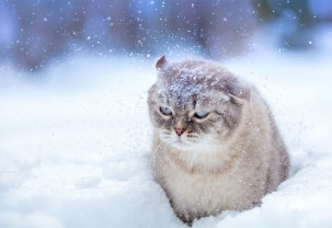 Până miercuri dimineaţa - Cod Galben de vreme deosebit de rece