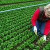MADR: Exonerarea de la înregistrarea în sistemul de agricultură ecologică