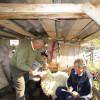OJZ Bihor: Inspectorii desfăşoară controale în fermele de ovine/caprine şi bovine eşantionate de APIA