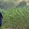PNDR: Tinerii fermieri - Condiţii minime pentru accesarea fondurilor europene