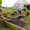 În derulare, Instalarea tinerilor fermieri: Condiţii necesare pentru accesarea fondurilor