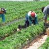 ANAF: Activităţi agricole - Declararea veniturilor determinate pe bază de norme de venit