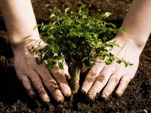 CJAPIA Bihor: În derulare - Depunerea cererilor pentru prima împădurire