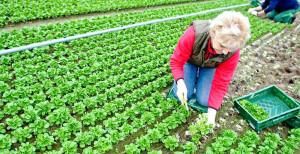 APIA. Agricultura ecologică - Termen la depunerea cererilor - 15 iunie