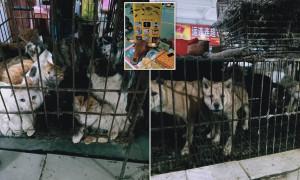 Liliecii, câinii şi pisicile se vând din nou în pieţele din China - Partidul Comunistr sărbătoreşte