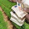 AFIR. Crearea/dezvoltarea lanțurilor scurte de aprovizionare - Termen la depunerea cererilor