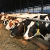 APIA: În sectorul zootehnic - Depunerea cererilor iniţiale anuale - termen 17 decembrie