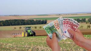 APIA. Cuantumuri la plată pentru fermieri