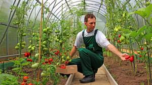 MFE. În sectorul agro-alimentar - Măsuri de sprijin din fonduri externe nerambursabile