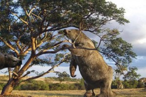 Descoperire în Guiana Franceză - Fosile de leneş gigantic