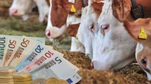 APIA. Demarează plățile în avans - Cuantumurile pe hectar și pe cap de animal
